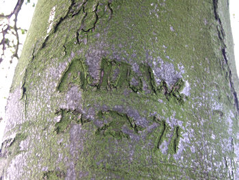 1971 tree carving, near Hemingbrough, Yorkshire