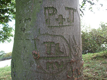 Tree carving, near Hemingbrough, Yorkshire