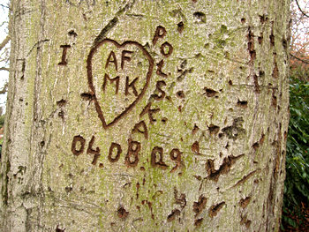 Love heart and initials carved into tree, Museum Gardens