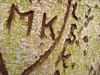 Detail of heart and initials carved into tree, York, 2009