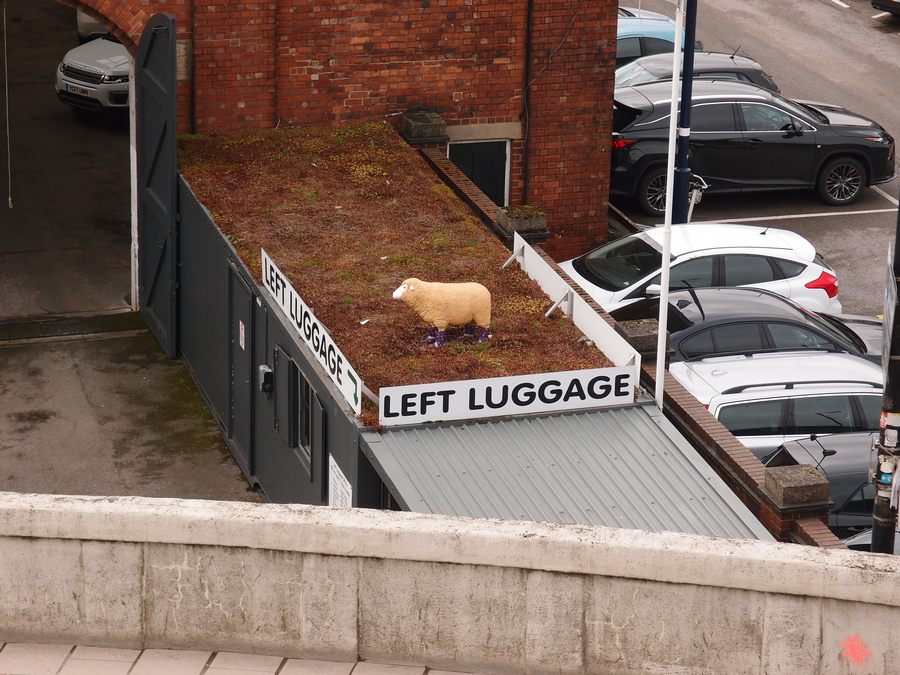 Plastic sheep in flowery wellies on a roof ...