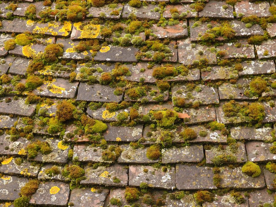 Moss and lichen on the roof of Barker Tower, 13 March 2018