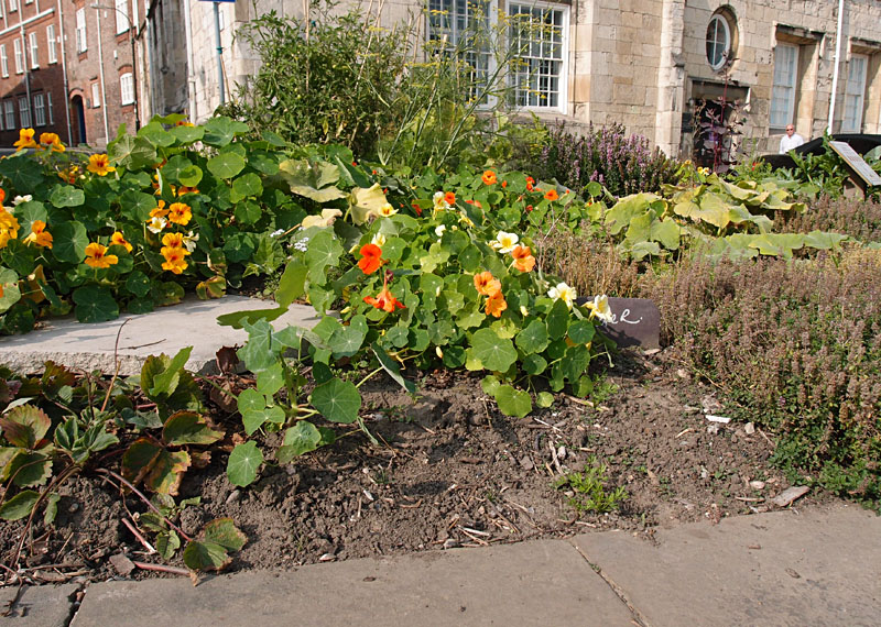 Edible York planting, Peasholme Green, 9 Sept 2014