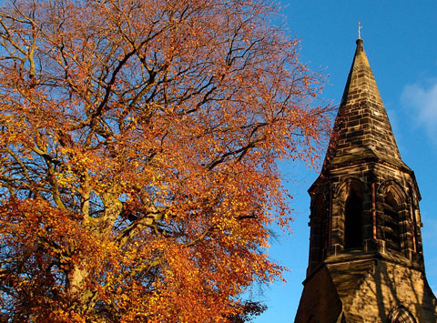 Beech tree and chapel spire