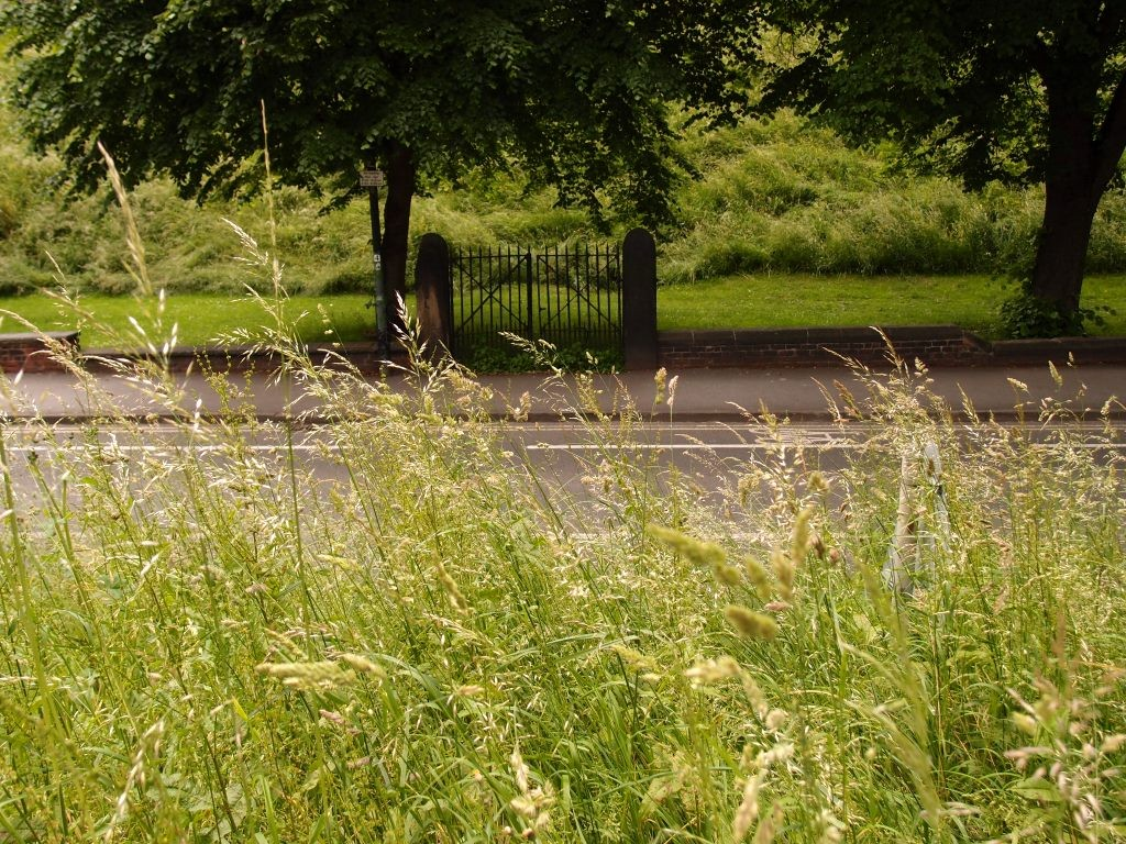 Bishopgate Street, grasses, 15 June 2016