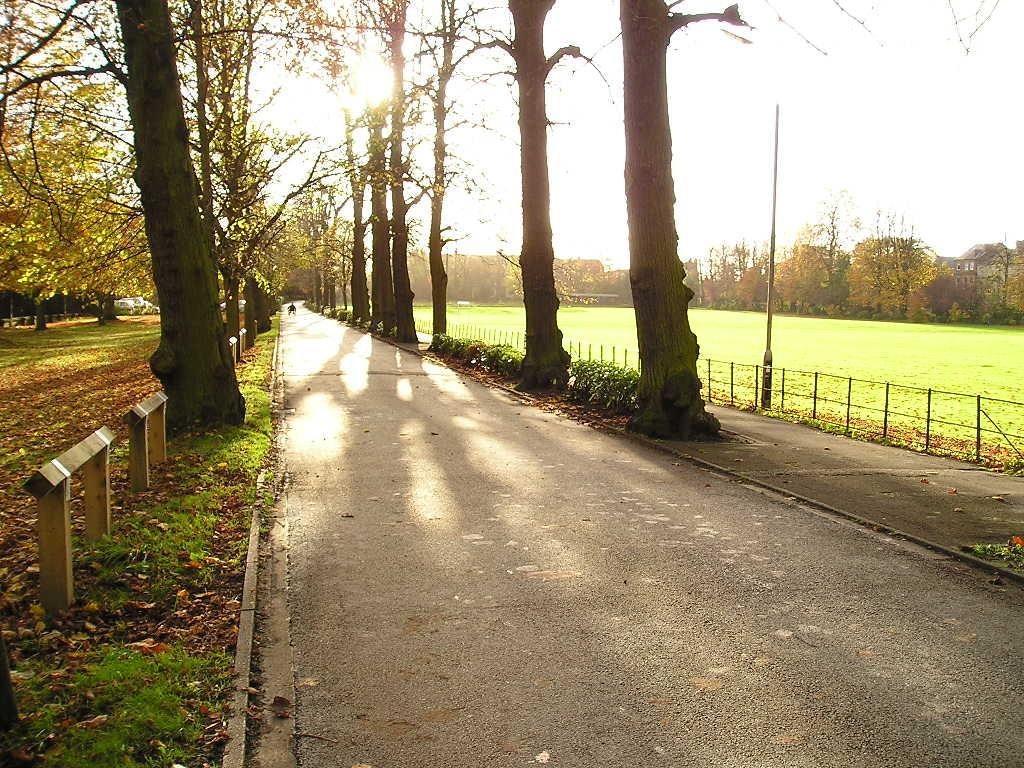 Bootham Park, tree-lined avenue, 4 Nov 2004