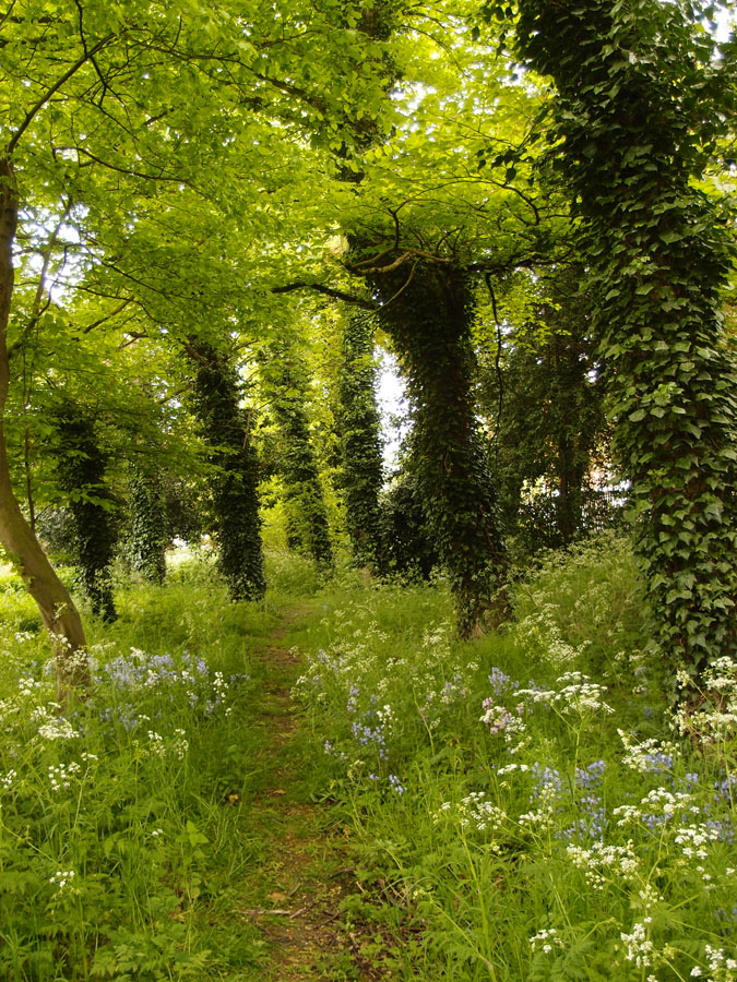 Bootham Park woodland edge, 17 May 2016