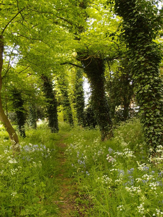 Bootham Park woodland edge, 17 May 2016