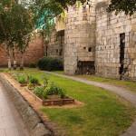 Into the rest garden: borage on Bootham