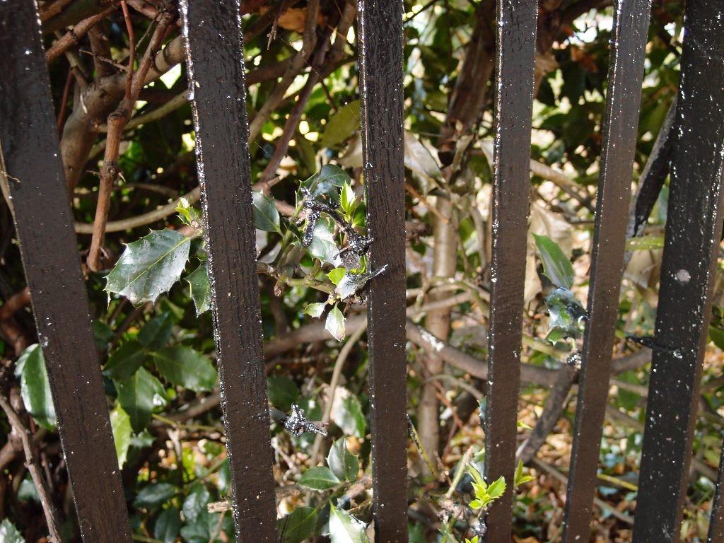 Bridge Lane railings, repainted ... and so is the holly