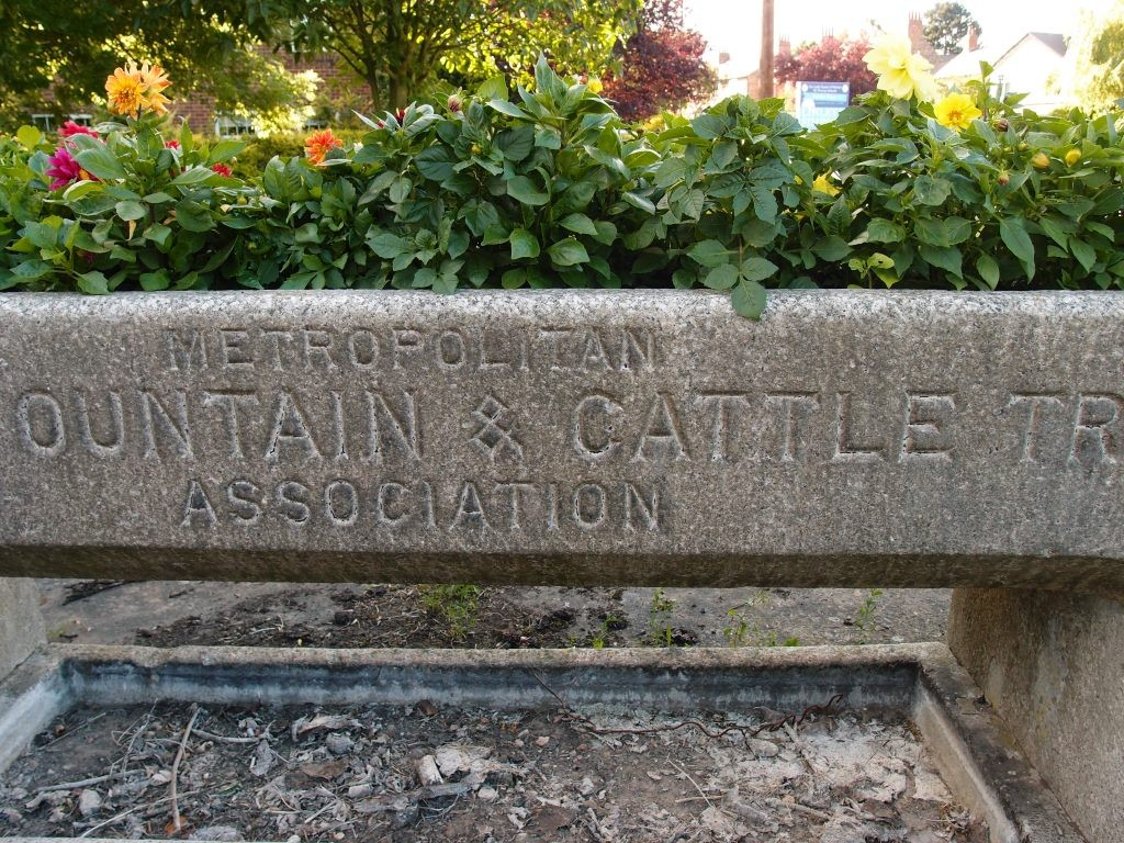 Cattle trough, Acomb, 3 July 2016