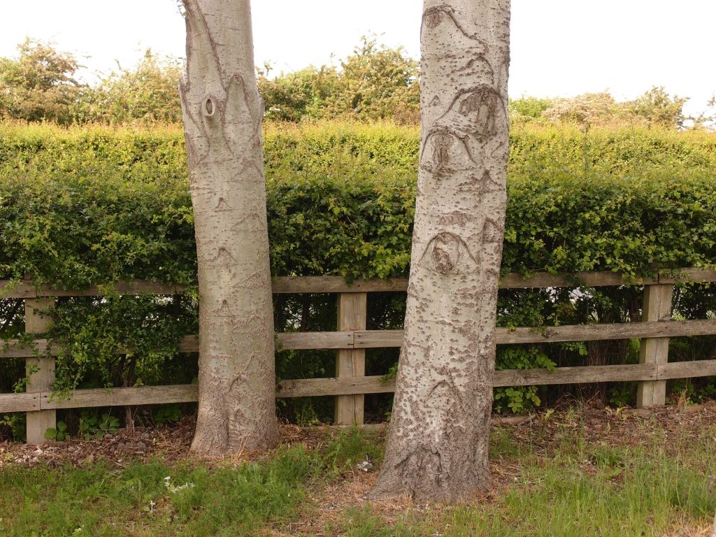 Some of these trees are thick-trunked and have interesting bark