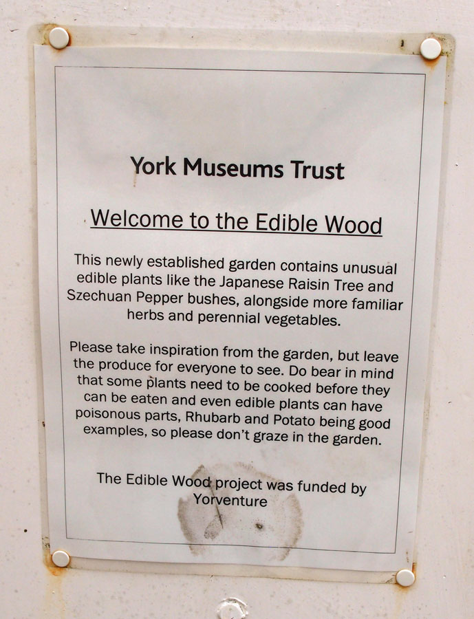 Please don't eat the edible wood