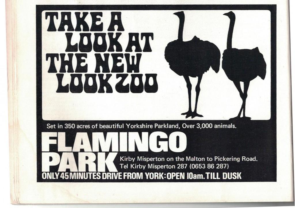 Heavy type, flamingo silhouettes