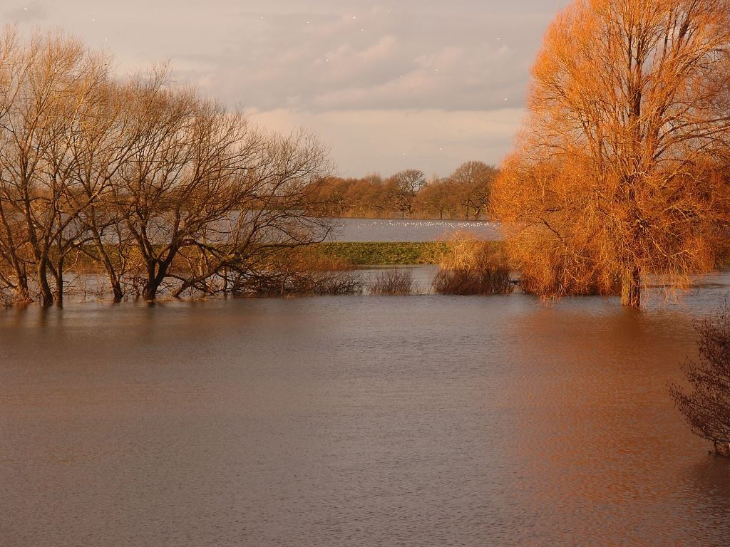 Floodwaters around grass and trees