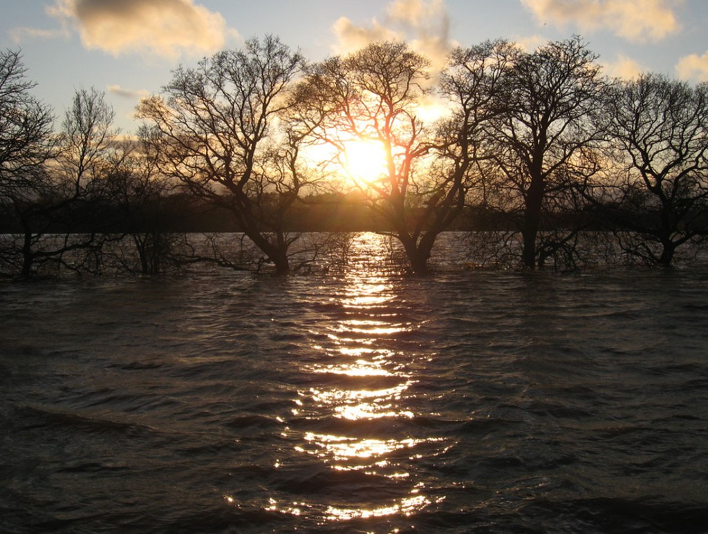 Sunset reflected in flood waters, with winter trees