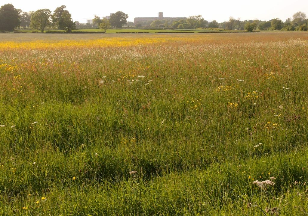 Terry's, across buttercup-filled ings, 5 June 2016