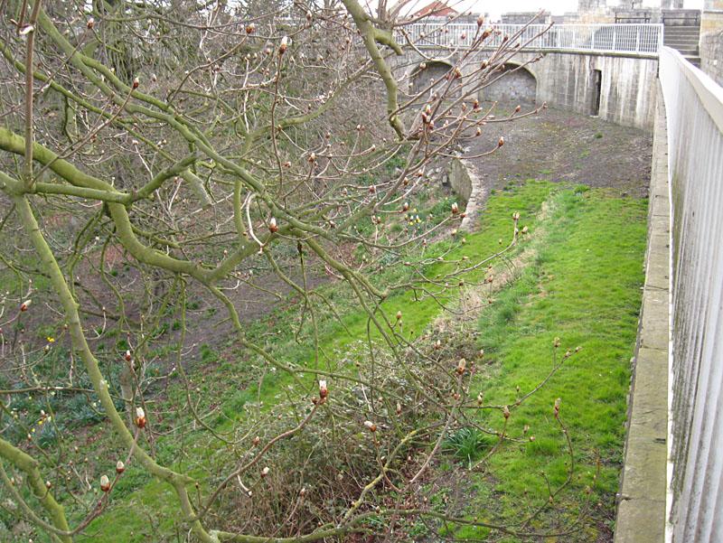 minster-gardens-horse-chestnut-140413