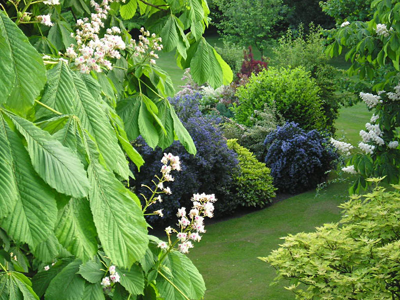 Minster gardens horse chestnut, 18 May 2004