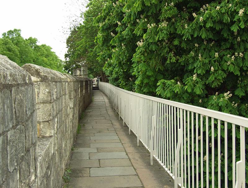 minster-gardens-horse-chestnut-310513