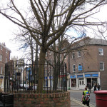 King's Square: notes on a mulberry tree