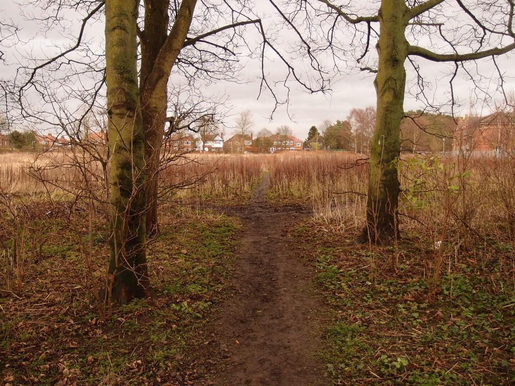 Junction of desire line paths, Clifton Park, 24 Jan 2016