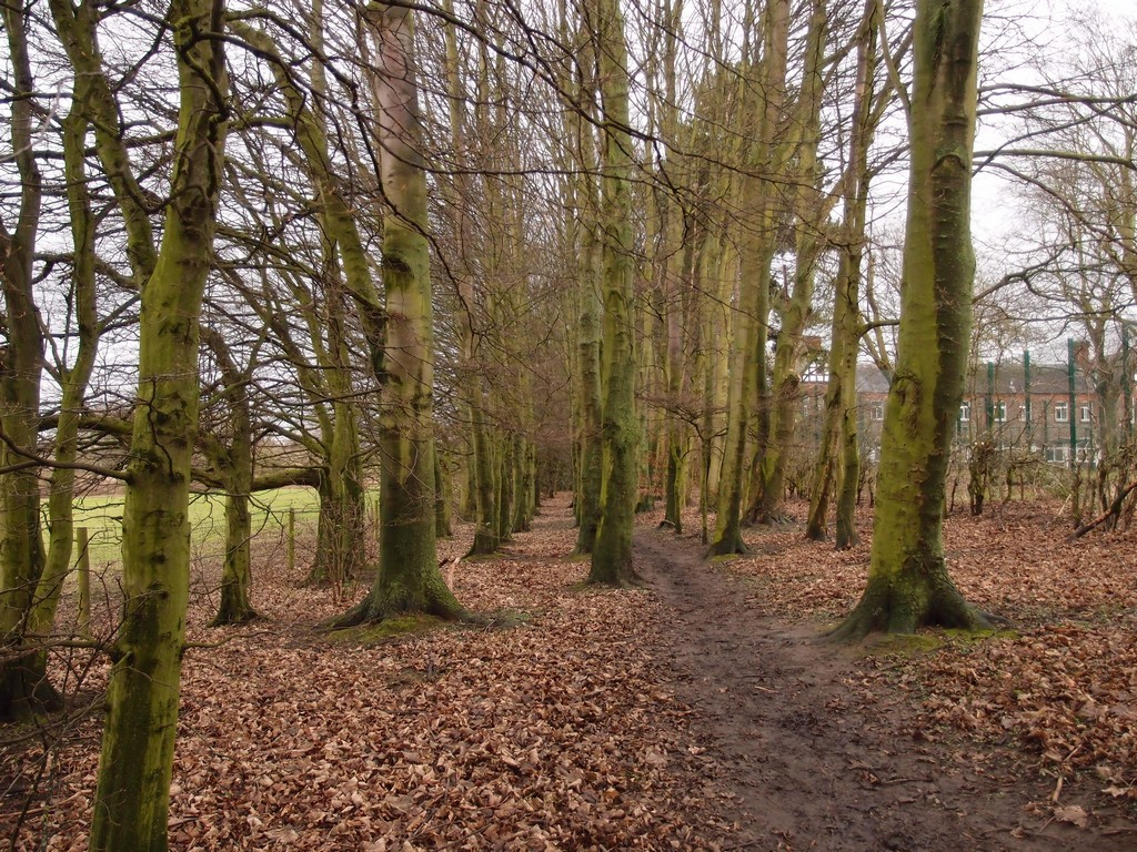 Pathway through trees, Clifton Park edge, 24 Jan 2016