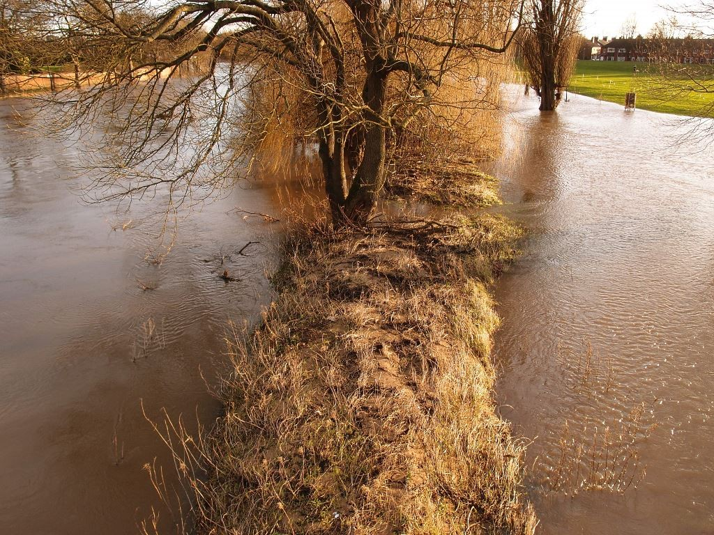 Floodwater around grass and trees