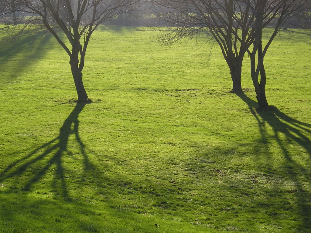 Trees and sunlight, winter solstice 2004