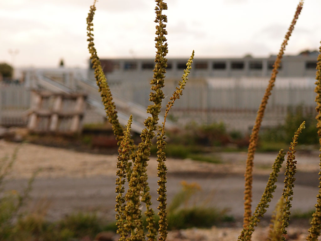 Weeds and industrial building