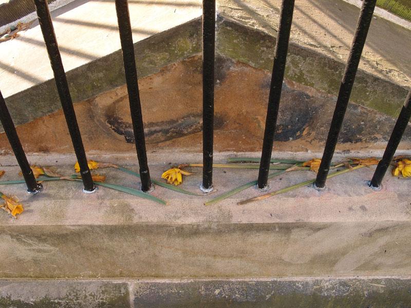 rigg-monument-restoration-daffodils-310317-800.jpg