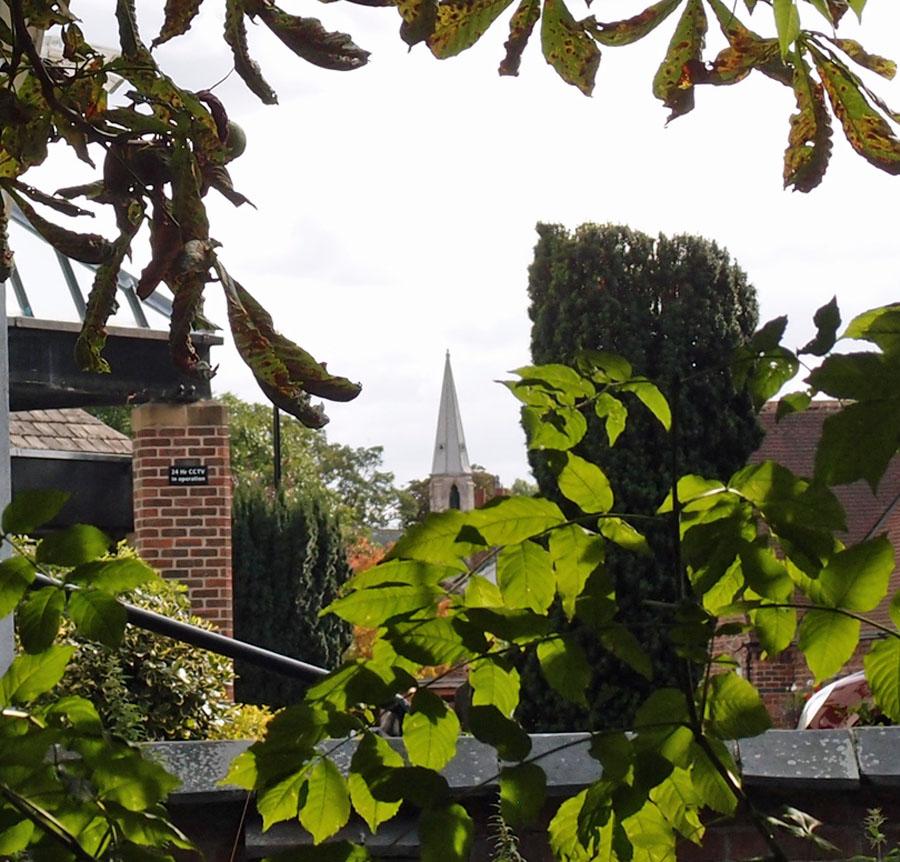 Church spire viewed through trees