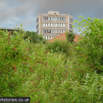 Appreciating weedy greenness: brownfield style