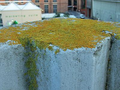 stonebow-york-lichen-110813-480