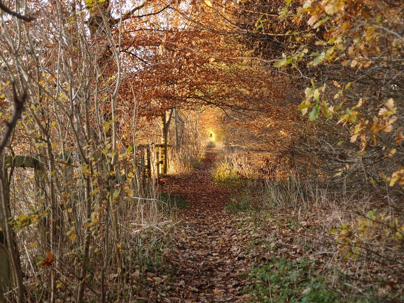 trees-clifton-park-1-281116-800.jpg
