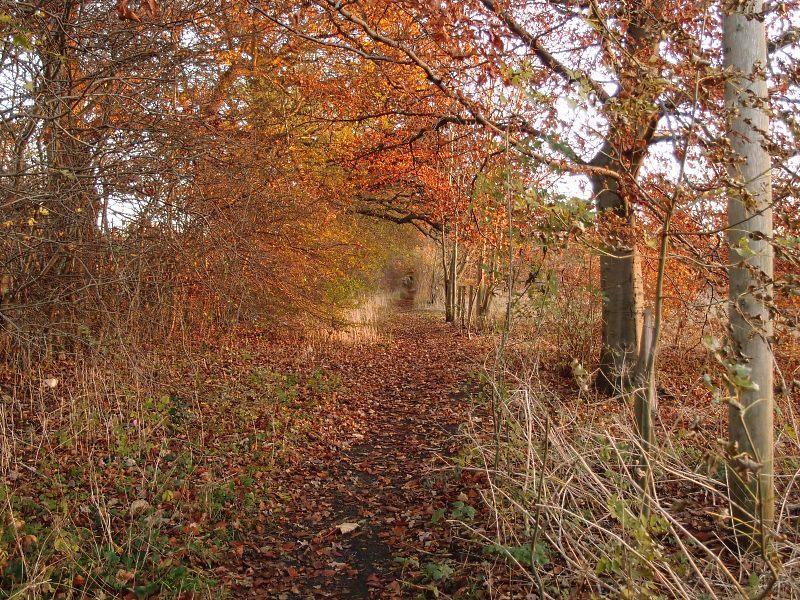 trees-clifton-park-281116-800.jpg