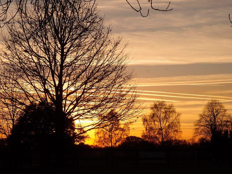 trees-clifton-park-sunset-2-281116-800.jpg