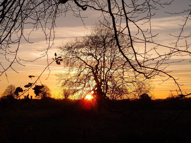 trees-clifton-park-sunset-281116-800.jpg