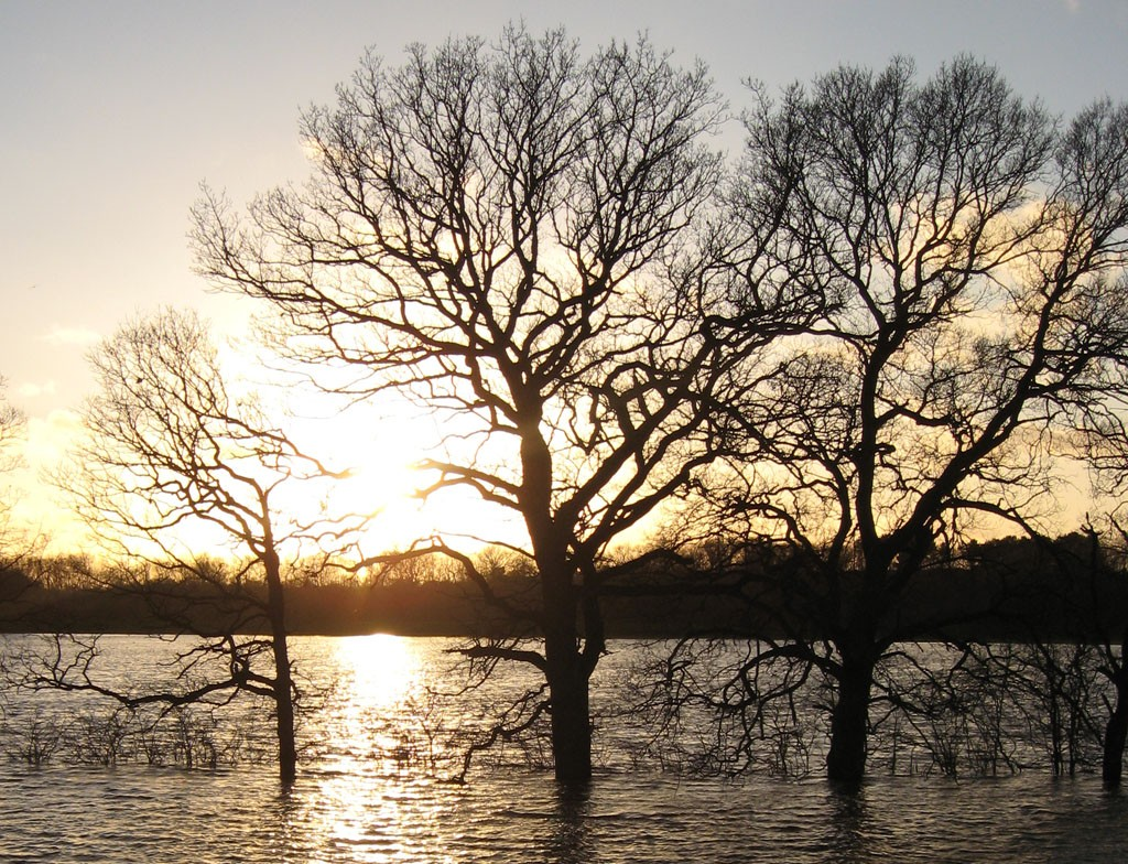 Winter trees, flood water, late afternoon sun