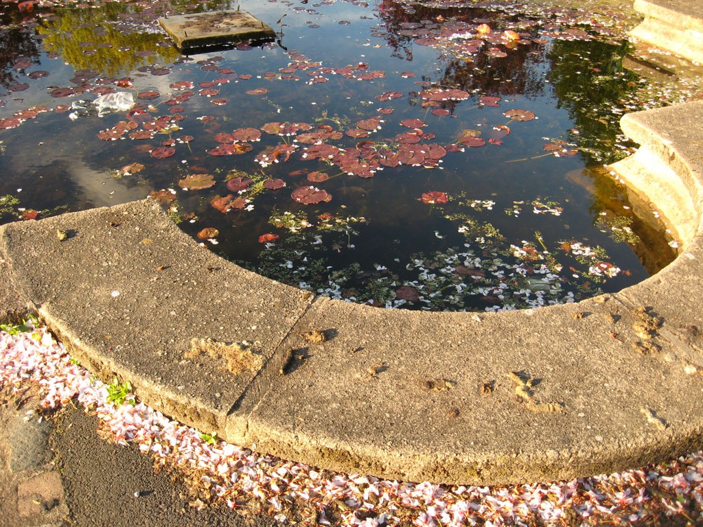 Pond, being peered into